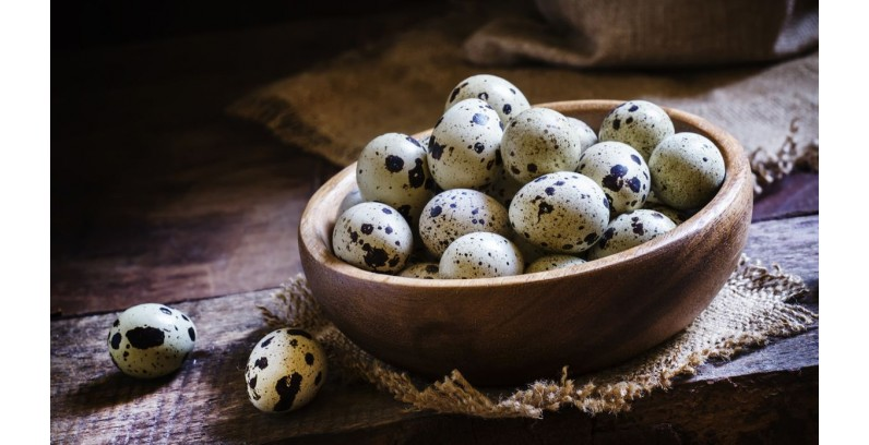 Are You Drinking Quail Eggs During Pregnancy? Is it Useful to Drink Quail Eggs while Pregnant?
